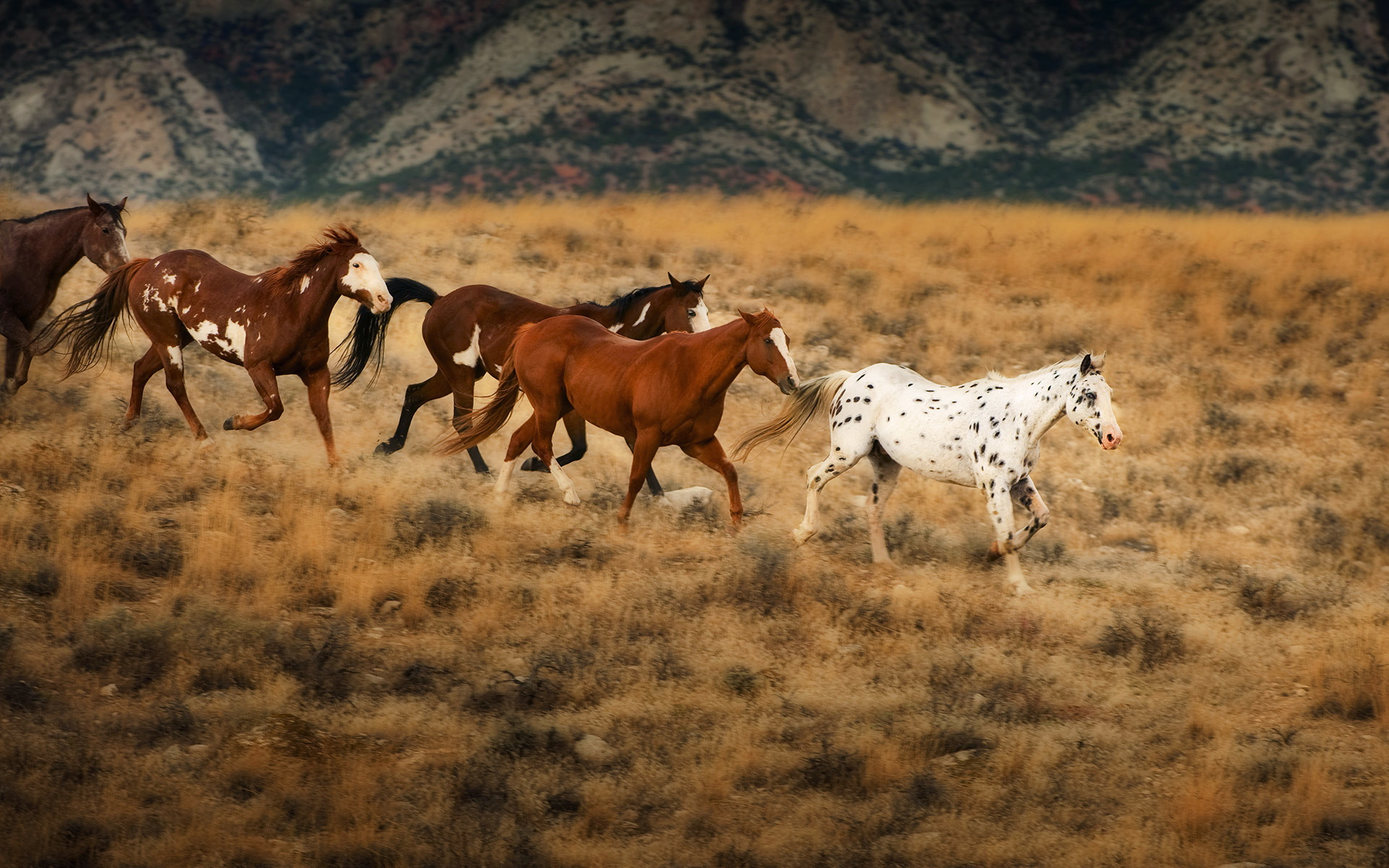 Running Horses Wallpaper Desktop More Information