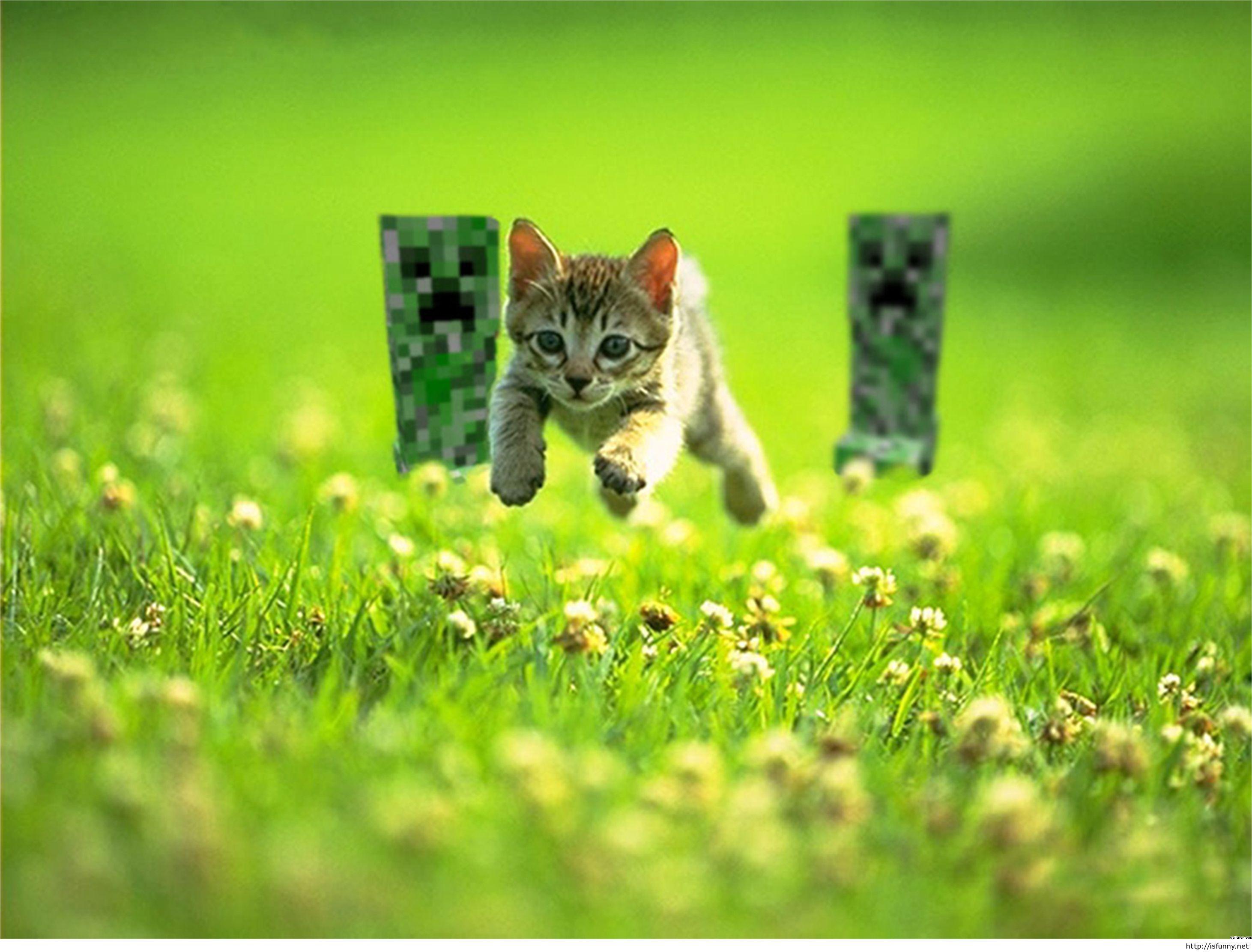 Funny minecraft cat wallpaper HD Pintast 2923x2223