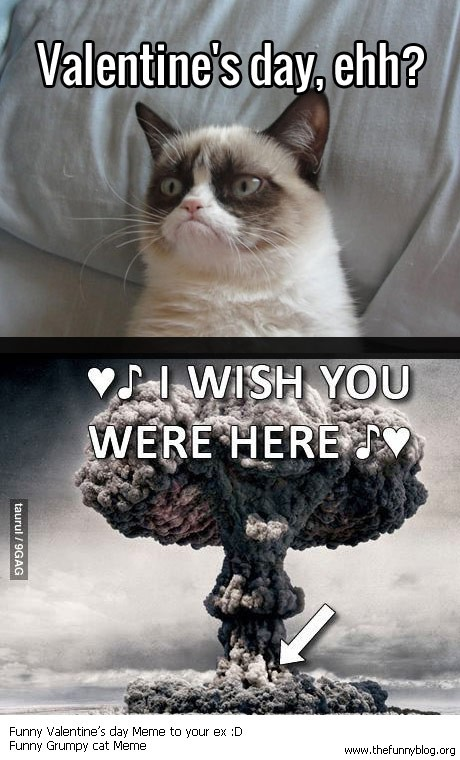 valentines day through these eyes of our favorite grumpy cat