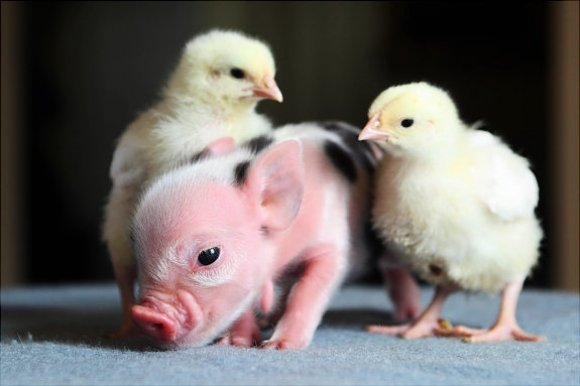 50 Incredibly Cute Baby Animal Pictures around the World Abduzeedo 580x386