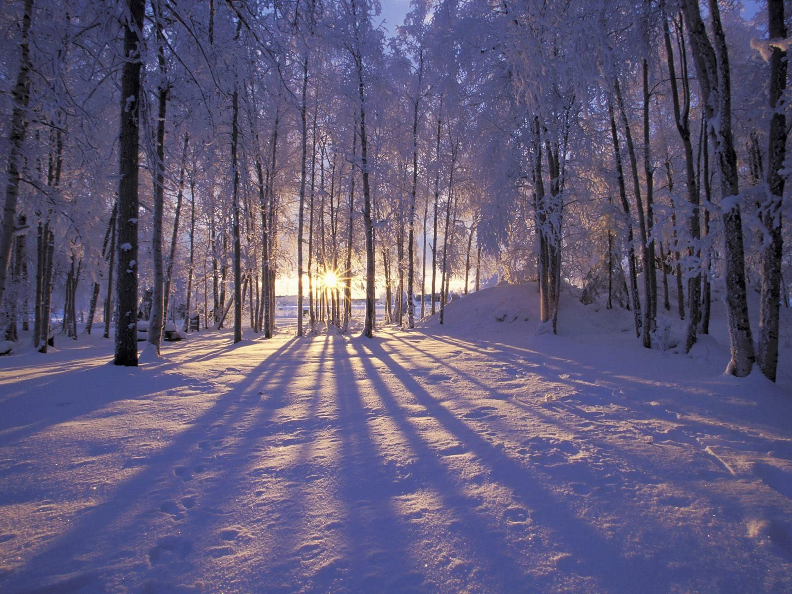 Winter Wallpapers HD Desktop Backgrounds Images and Pictures 1600x1200