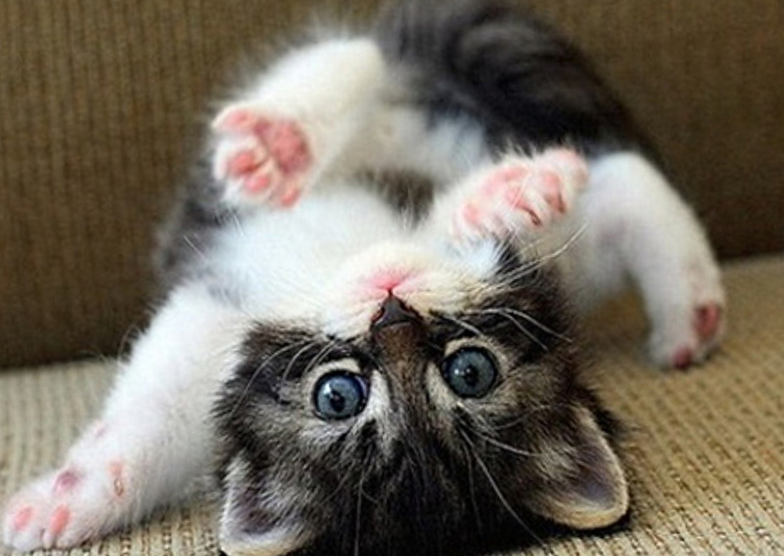 Cute Animal Wallpapers Collection of Cute Animal 1142x810