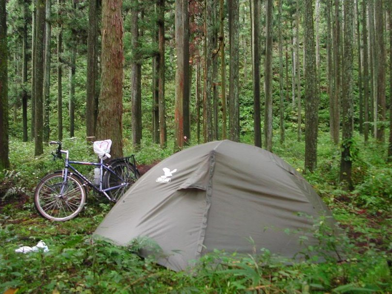 Camping in the forest wallpaper   ForWallpapercom 808x606