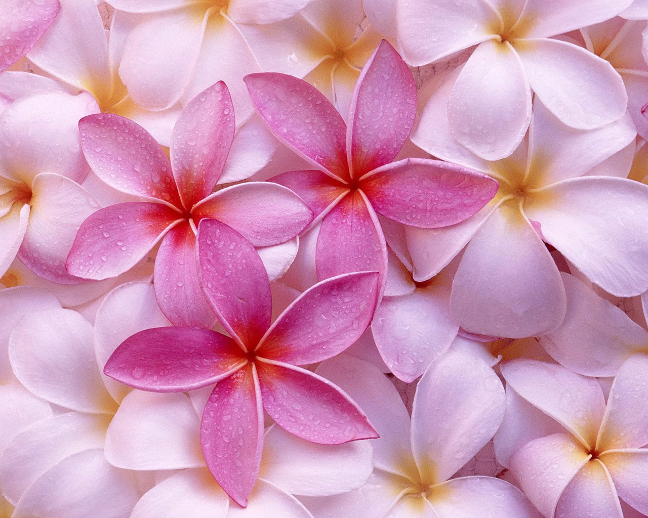 Top 10 Flowers Wallpapers 1280x1024