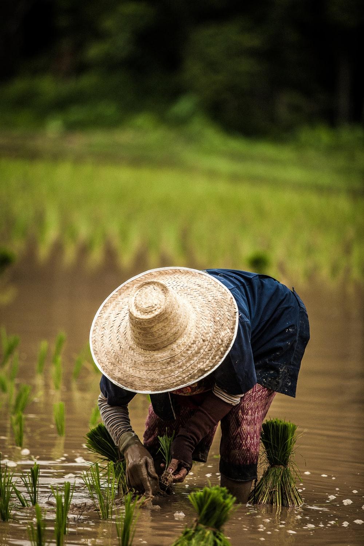 27 Farmer Pictures Download Images on Unsplash 1000x1500