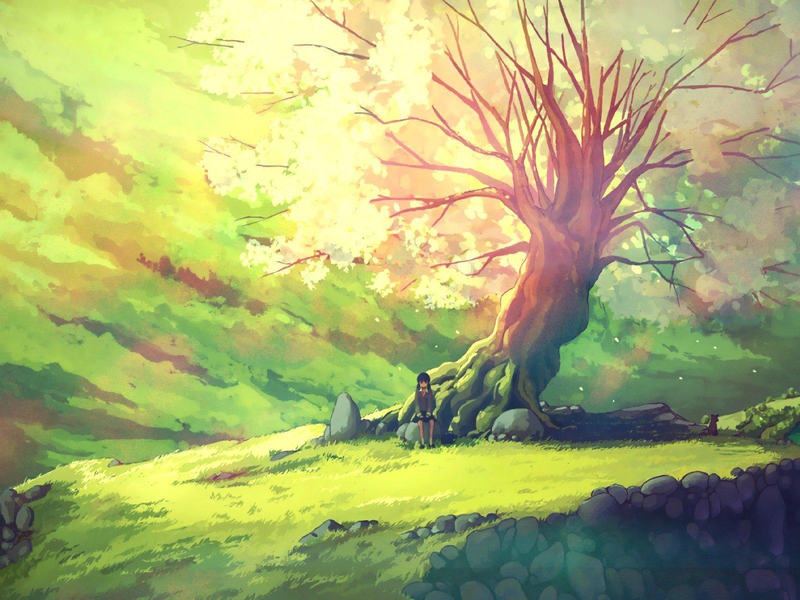 nature anime tree trees scenic zerochan grass wallpapers landscape wallpapersafari pixiv rocks cherry hill chevron wallpaperup right