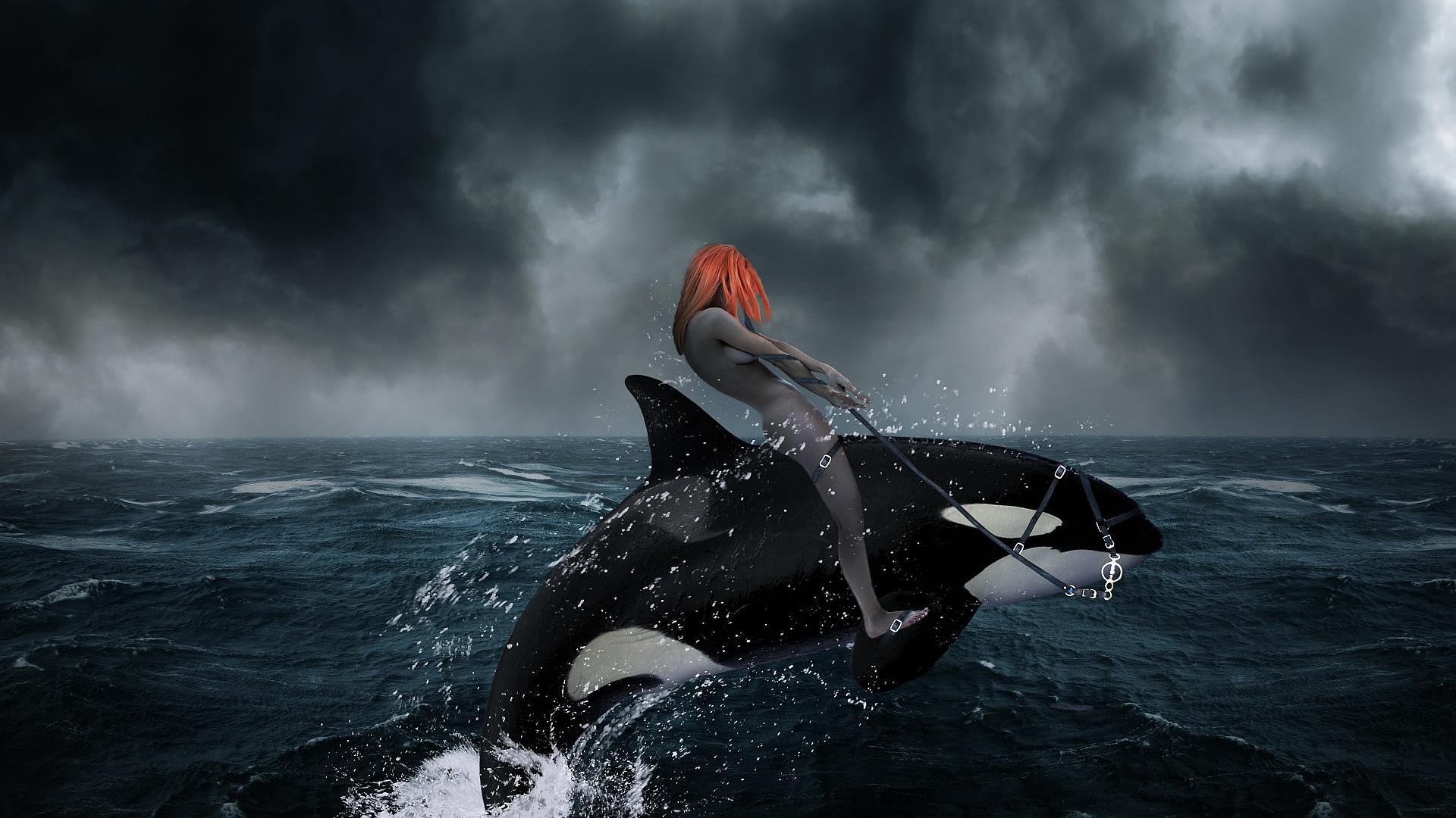 Killer whale HD 1920x1080 1920x1080