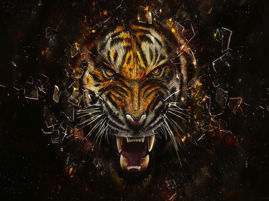 Cool Mobile 3d Wallpapers Hd: Cool Tiger Wallpapers