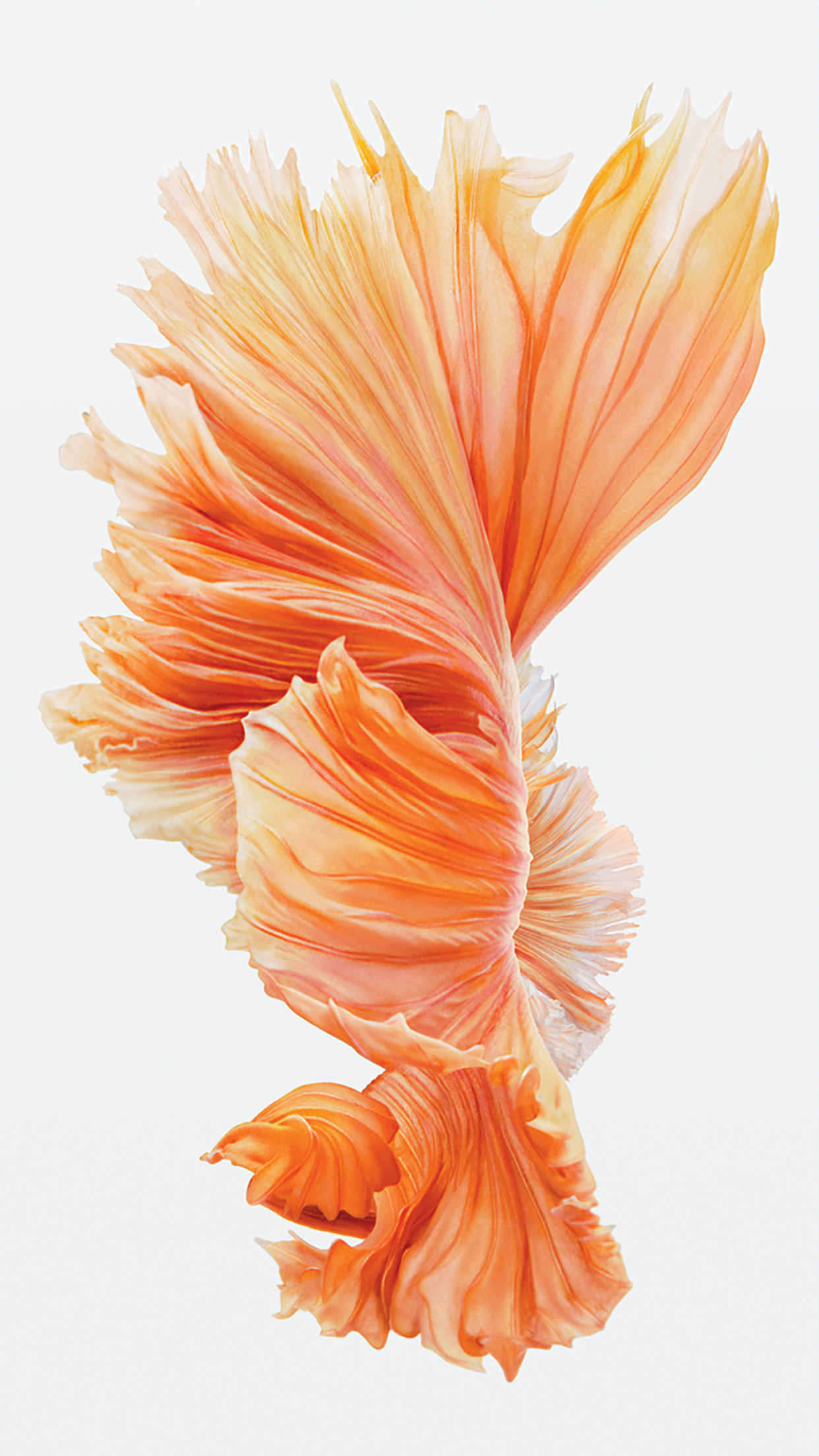 Get the Beautiful Live Wallpapers from iPhone 6s as Still Wallpapers 1242x2208