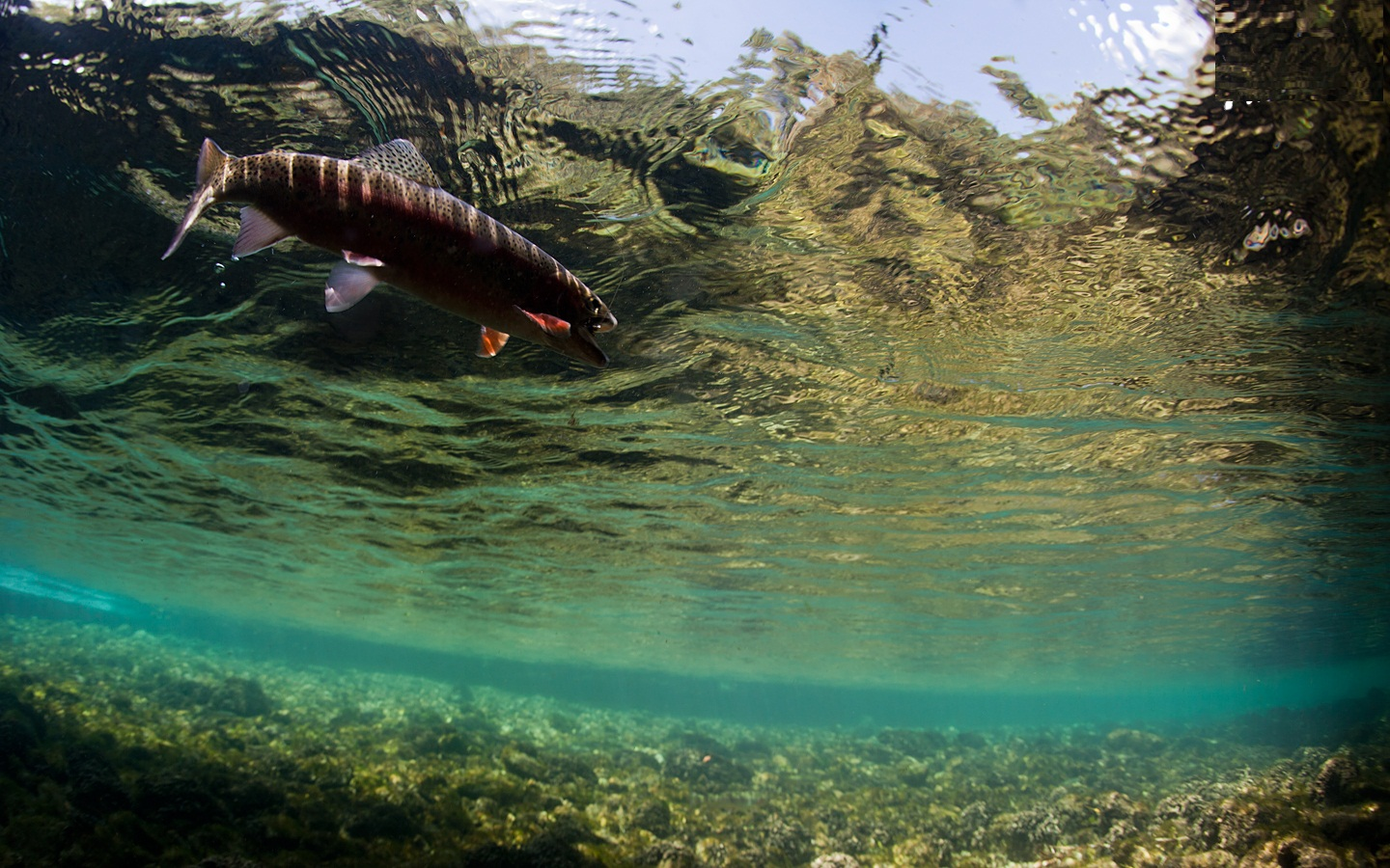 Awesome Fly Fishing wallpaper 1440x900 33115 1440x900