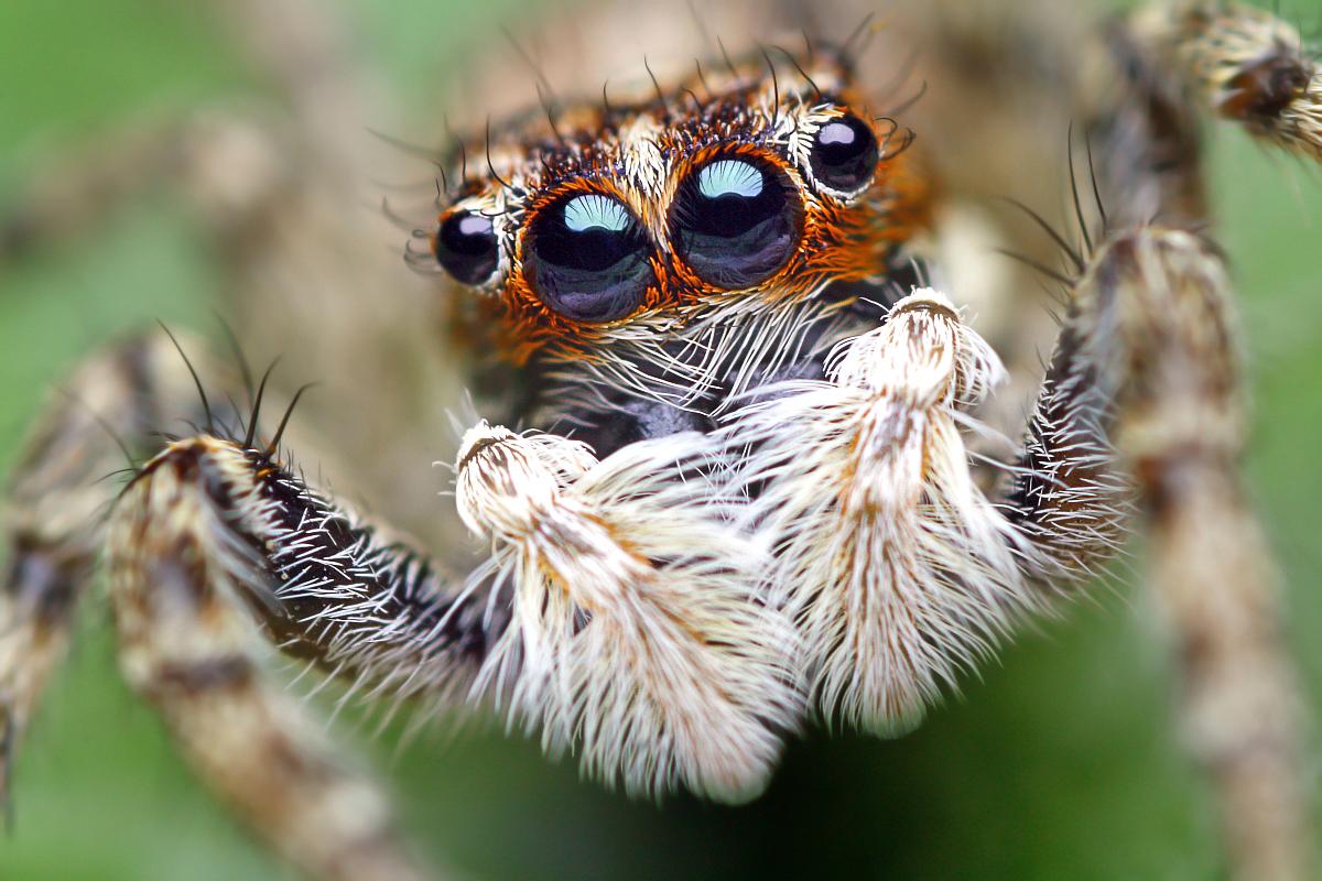 Смешные картинки с пауком, татарстан как