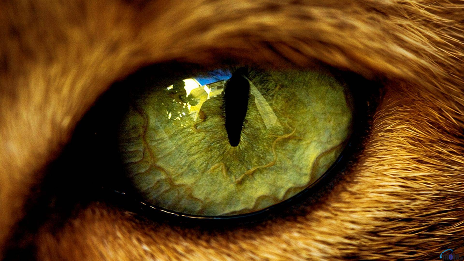 Cats Eye   Cats Wallpaper 1920x1080
