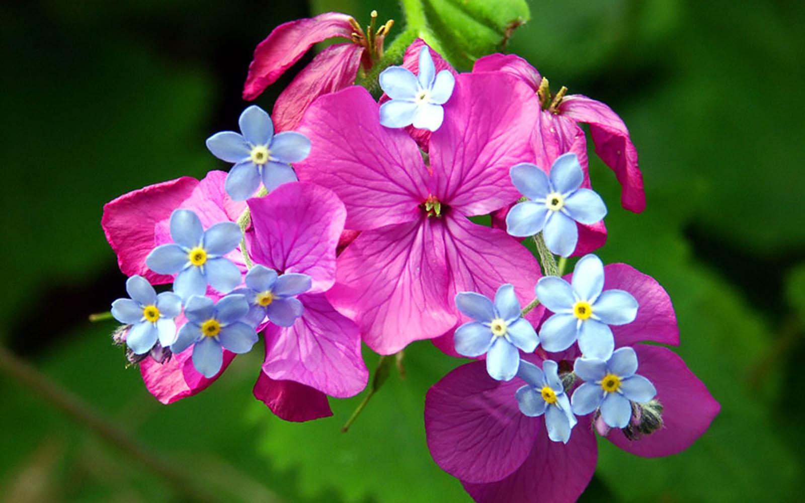Wallpaper Spring Flowers Wallpupcom 1600x1000