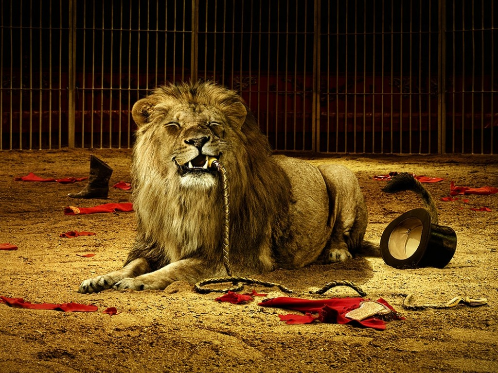 Lion hd wallpapers Movies Songs Lyrics 1024x768