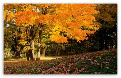 Fall Scene HD wallpaper for Standard 43 54 Fullscreen UXGA XGA SVGA 510x330