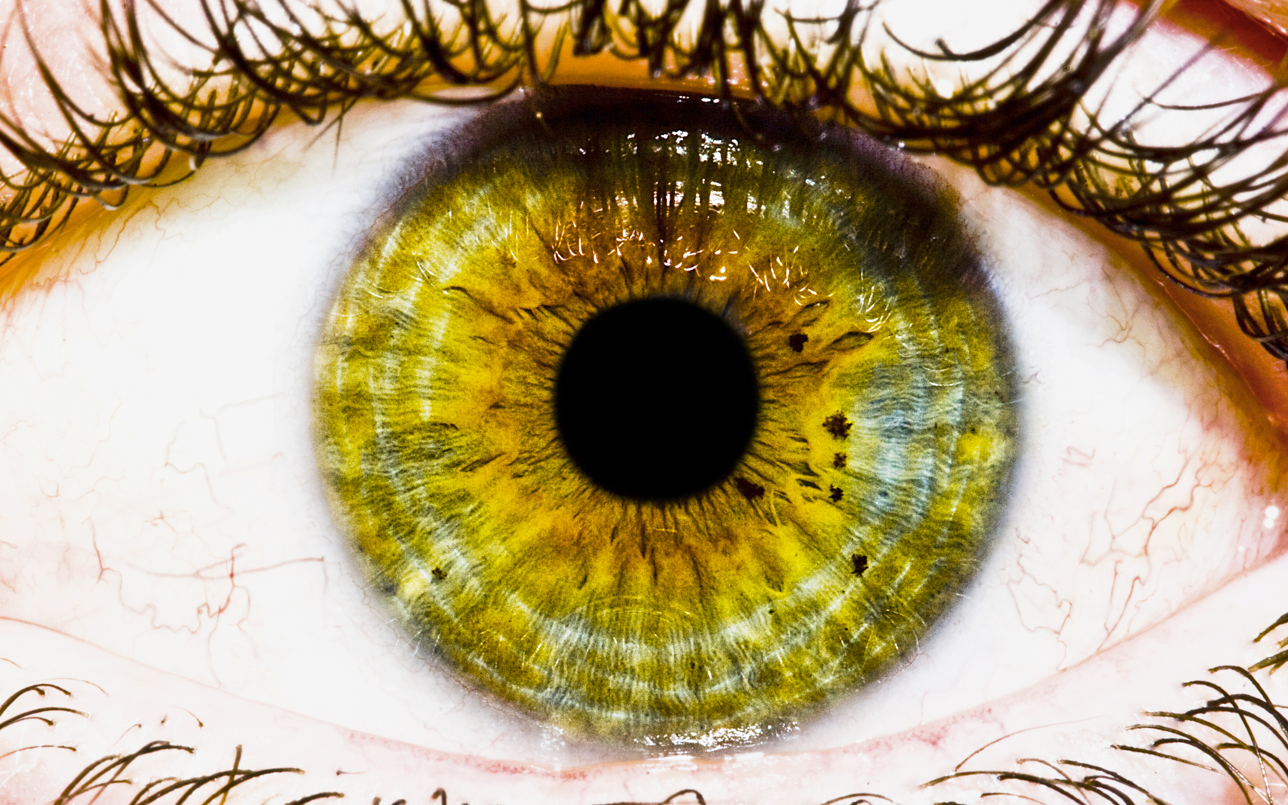 The Eye Wallpapers HD Wallpapers 2560x1600