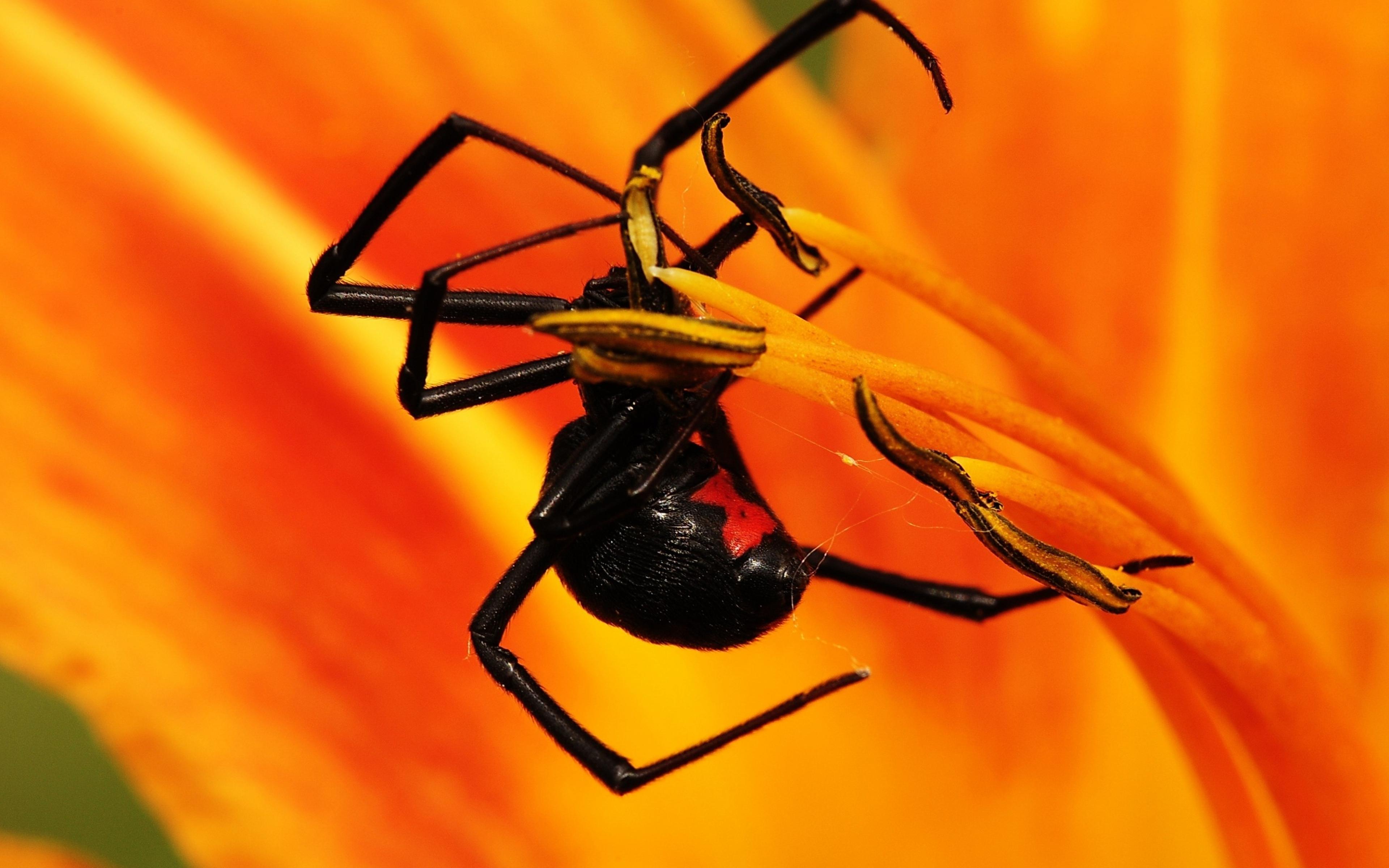 Spider Wallpaper 3840x2400 ID57690   WallpaperVortexcom 3840x2400