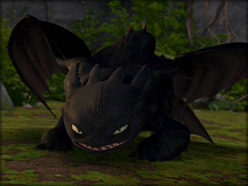 Toothless   Toothless the Dragon Wallpaper 33059178 800x600
