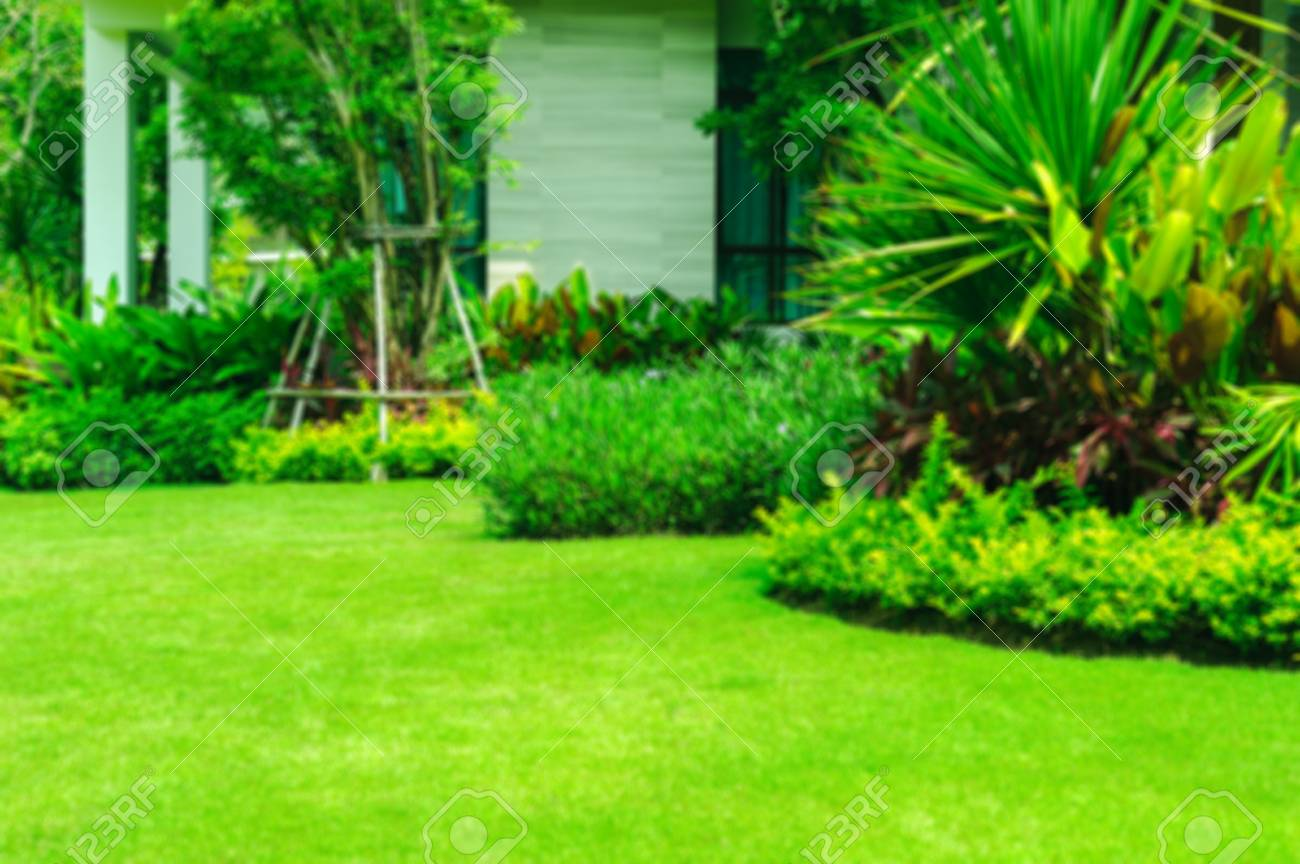 Green Lawn The Front Lawn For Background Garden Landscape Design 1300x864
