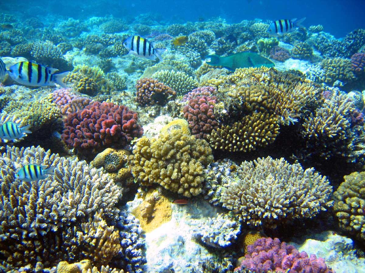Coral Reef Wallpaper 150x150 Beautiful Coral Reef HD Wallpaper Nature 1200x900