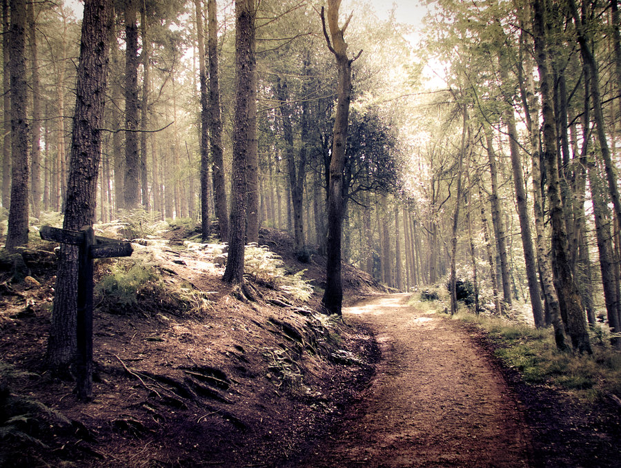 STOCK Path through a spooky indie style forest by needanewname on 900x678