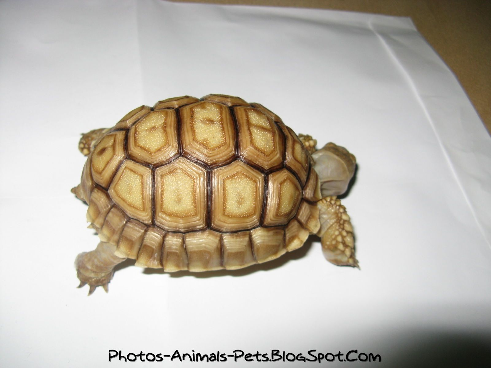 Cute baby turtles pictures Photos Animals PetsBlogSpotcom 1600x1200