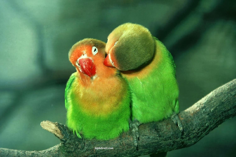 Wallpapers Love Birds Desktop Wallpapers: Wallpaper Love Birds