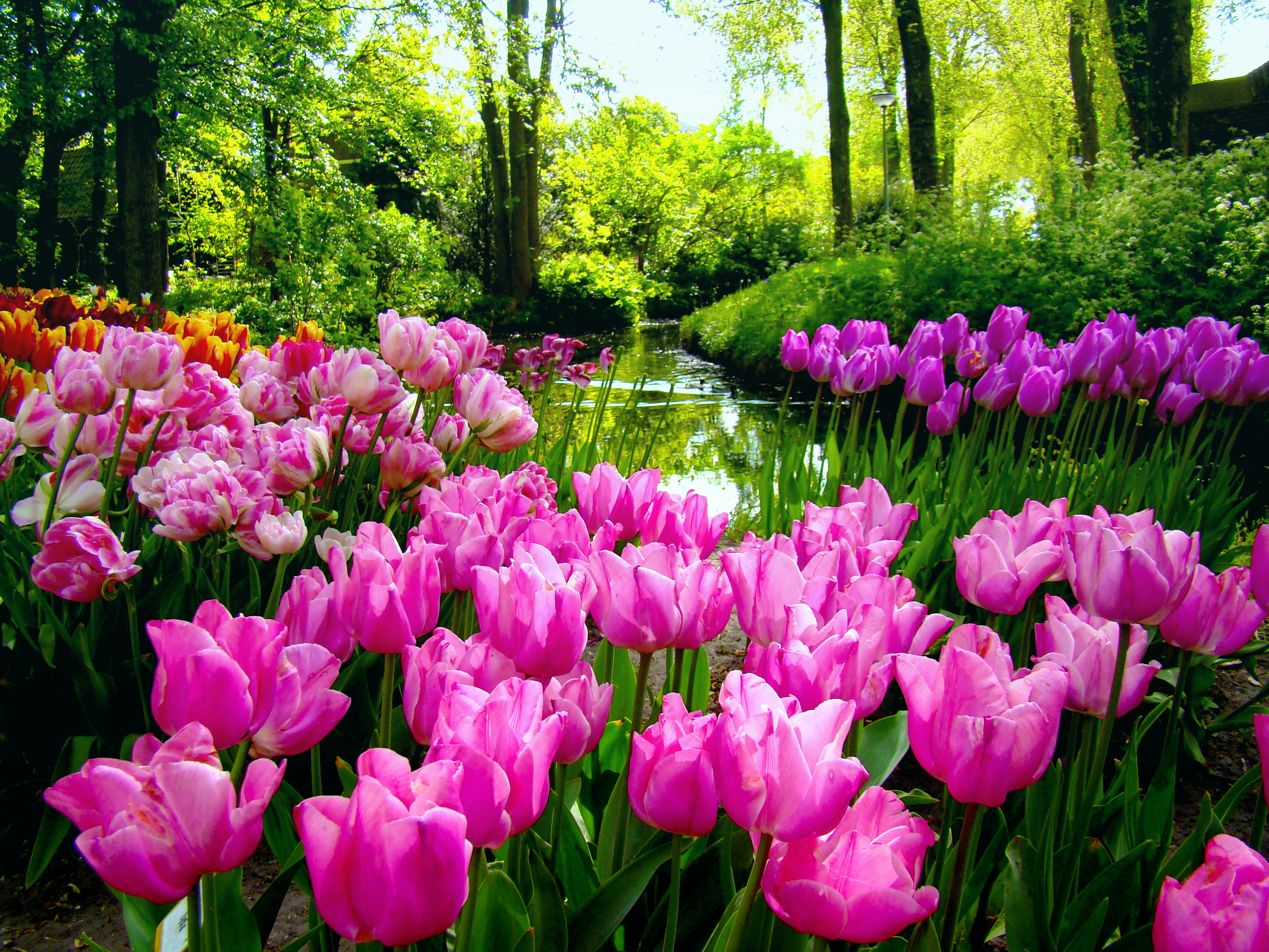 Spring garden wallpaper desktop wallpapersafari - Garden screensavers free ...