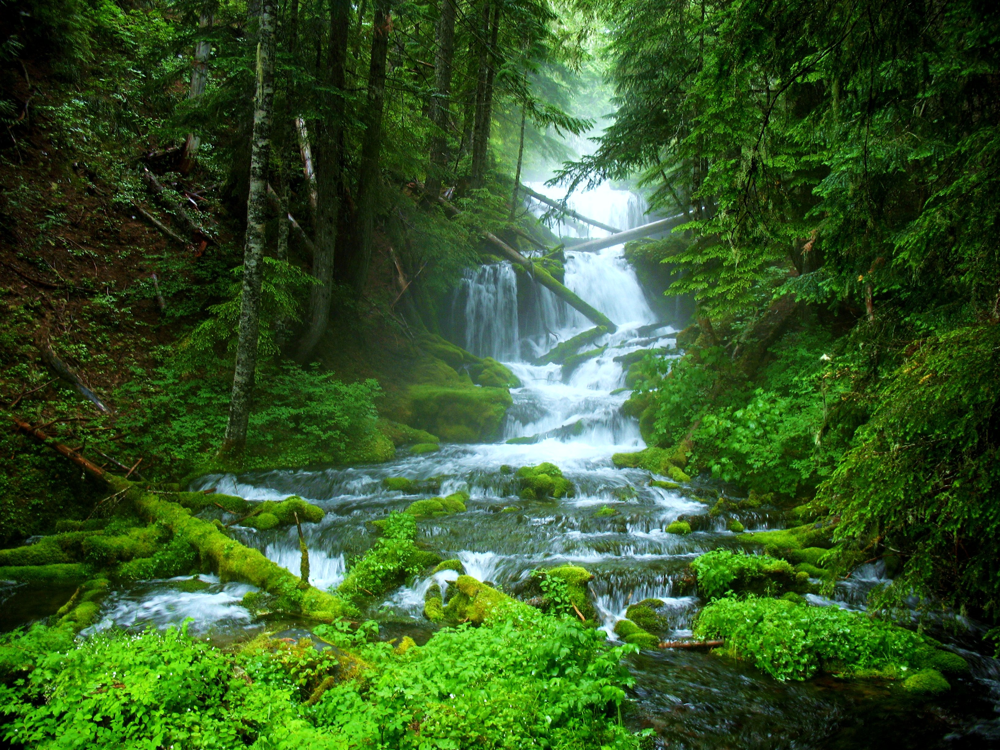 Description from forest green nature water waterfall wallpaper free ...