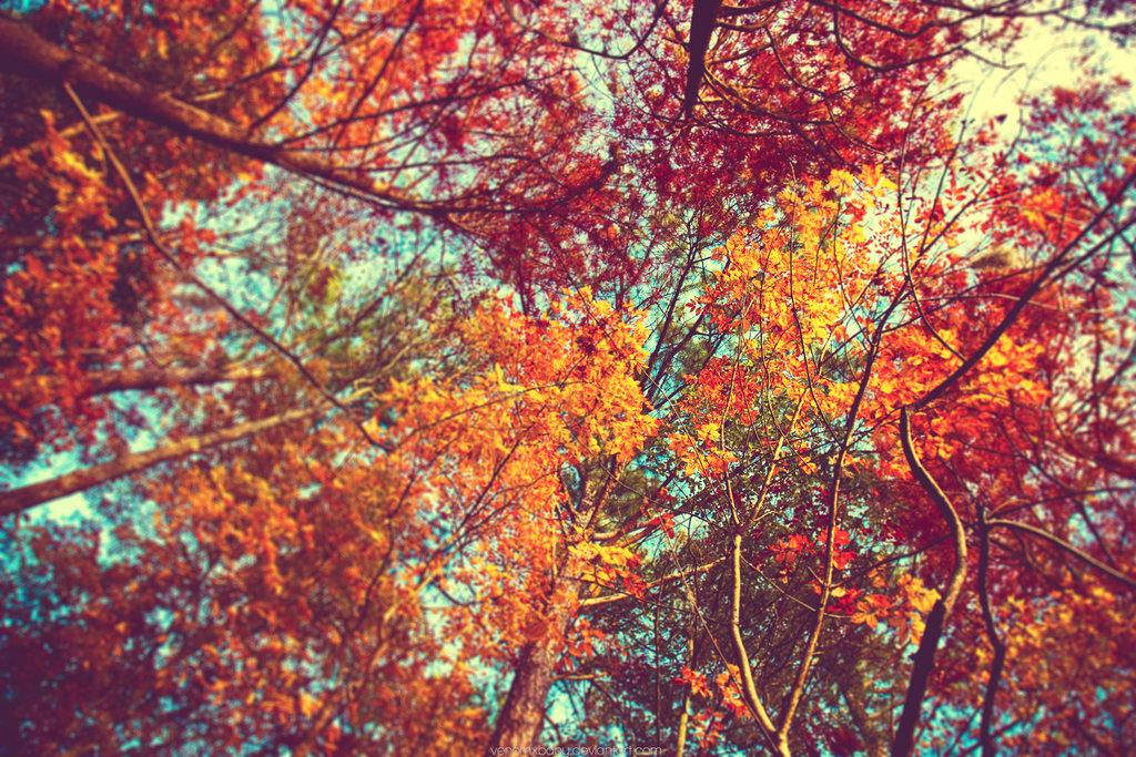 autumn leaves wallpaper by venomxbaby 1024x683