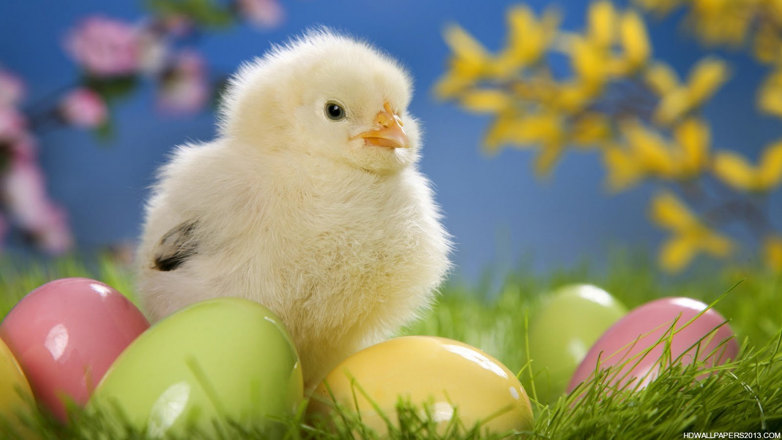 48+ Spring Baby Animals Desktop Wallpapers on ...