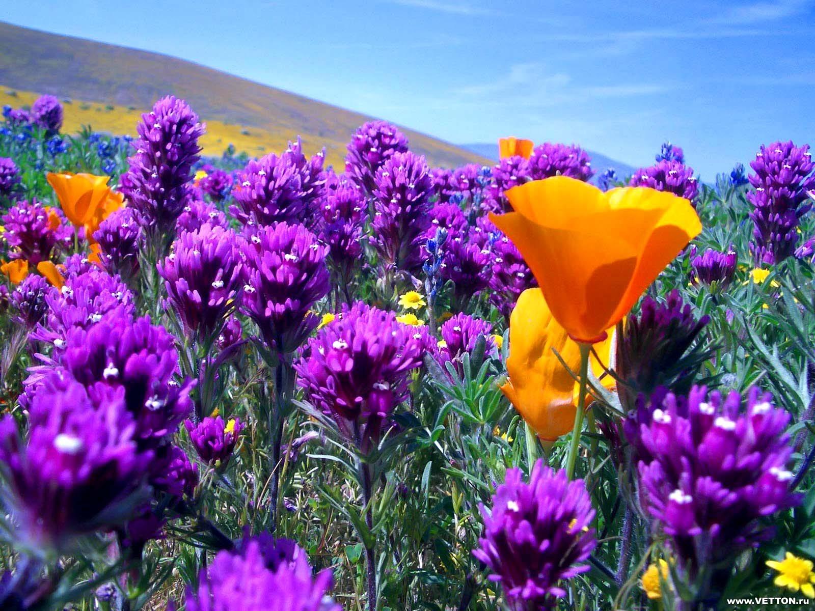 Beautiful Spring Flowers Wallpapers - WallpaperSafari