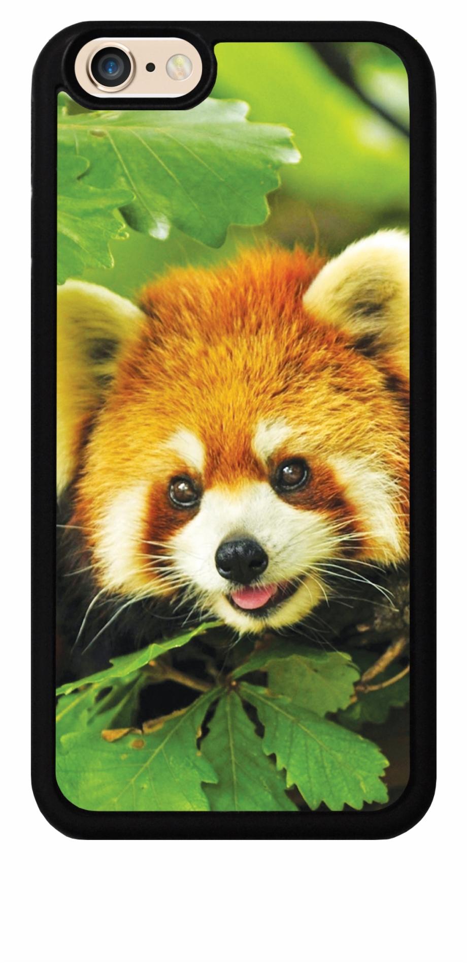 Free Download Red Panda Cute For Ipod Red Panda Wallpaper Hd