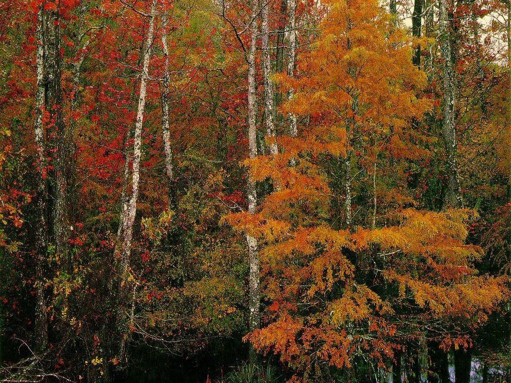 Fall Scene wallpaper 1024x768