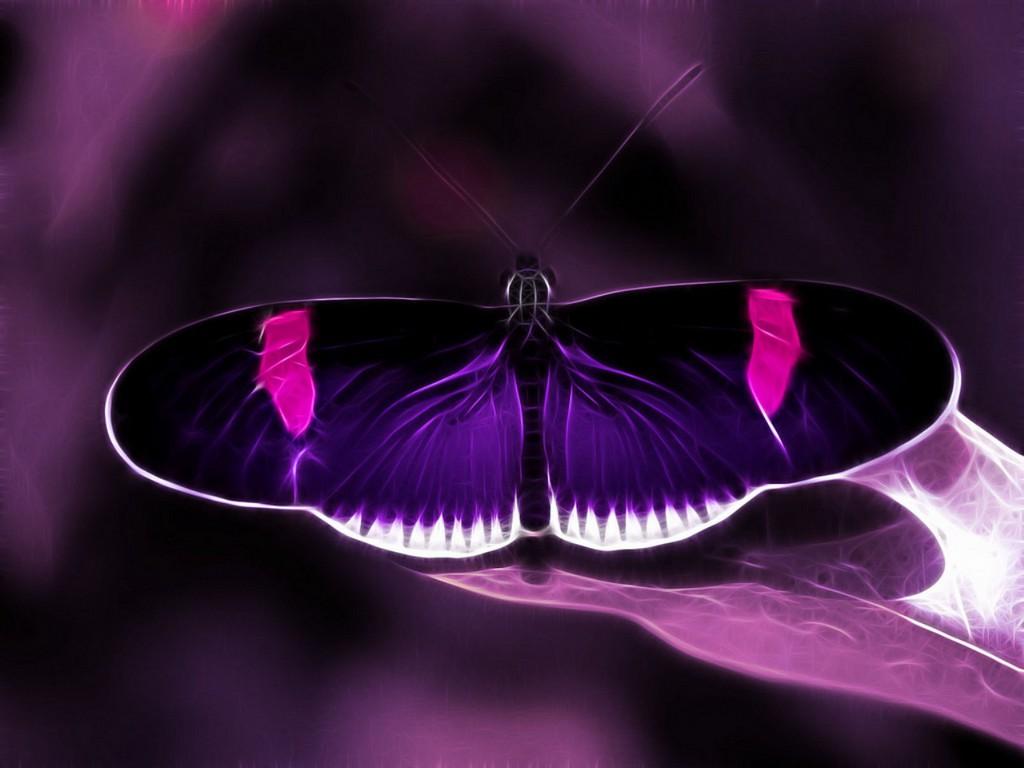 Purple butterfly wallpaper - photo#47