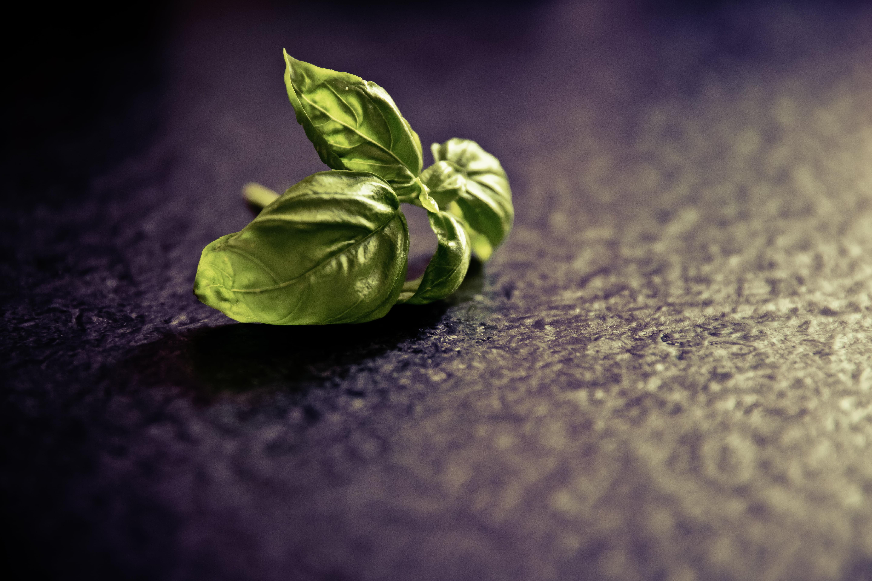 Green leaf plant basil HD wallpaper Wallpaper Flare 5760x3840