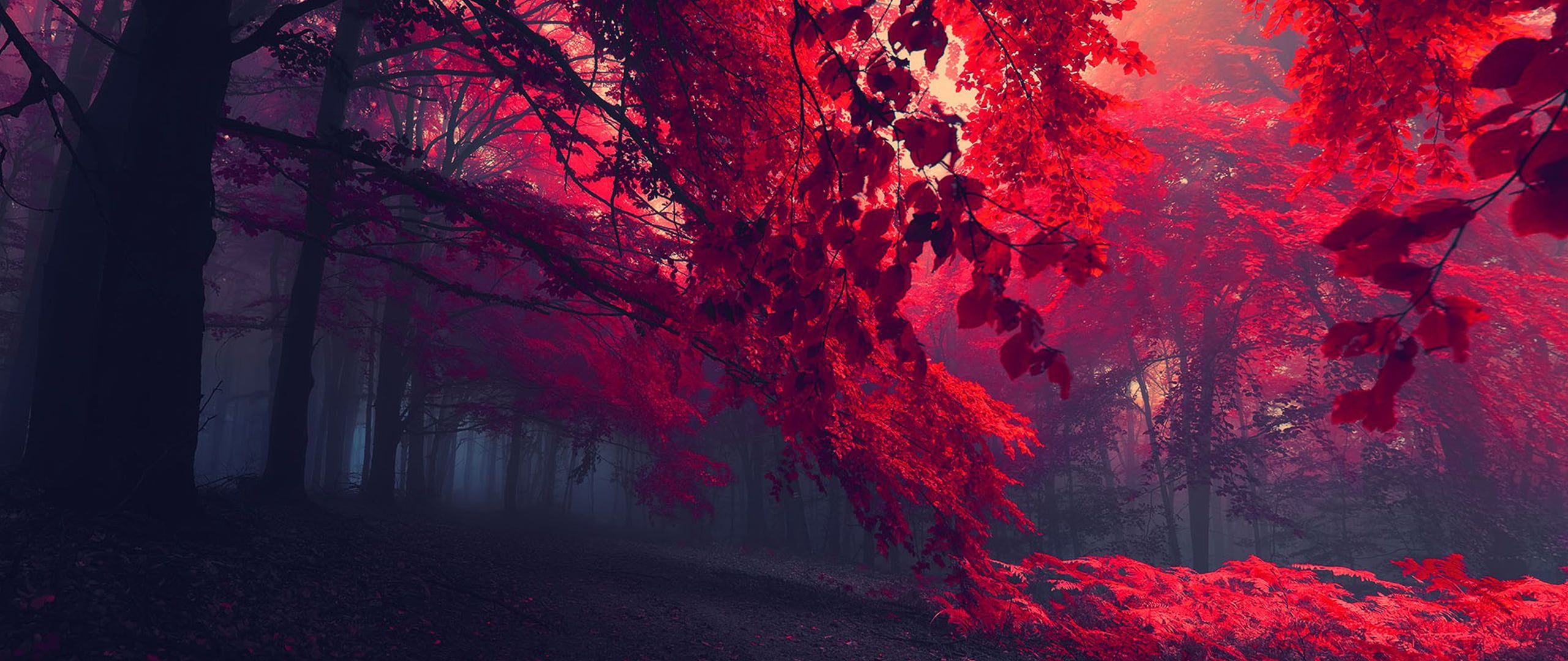 red leafed trees ultra wide photography nature 2K wallpaper 2560x1080