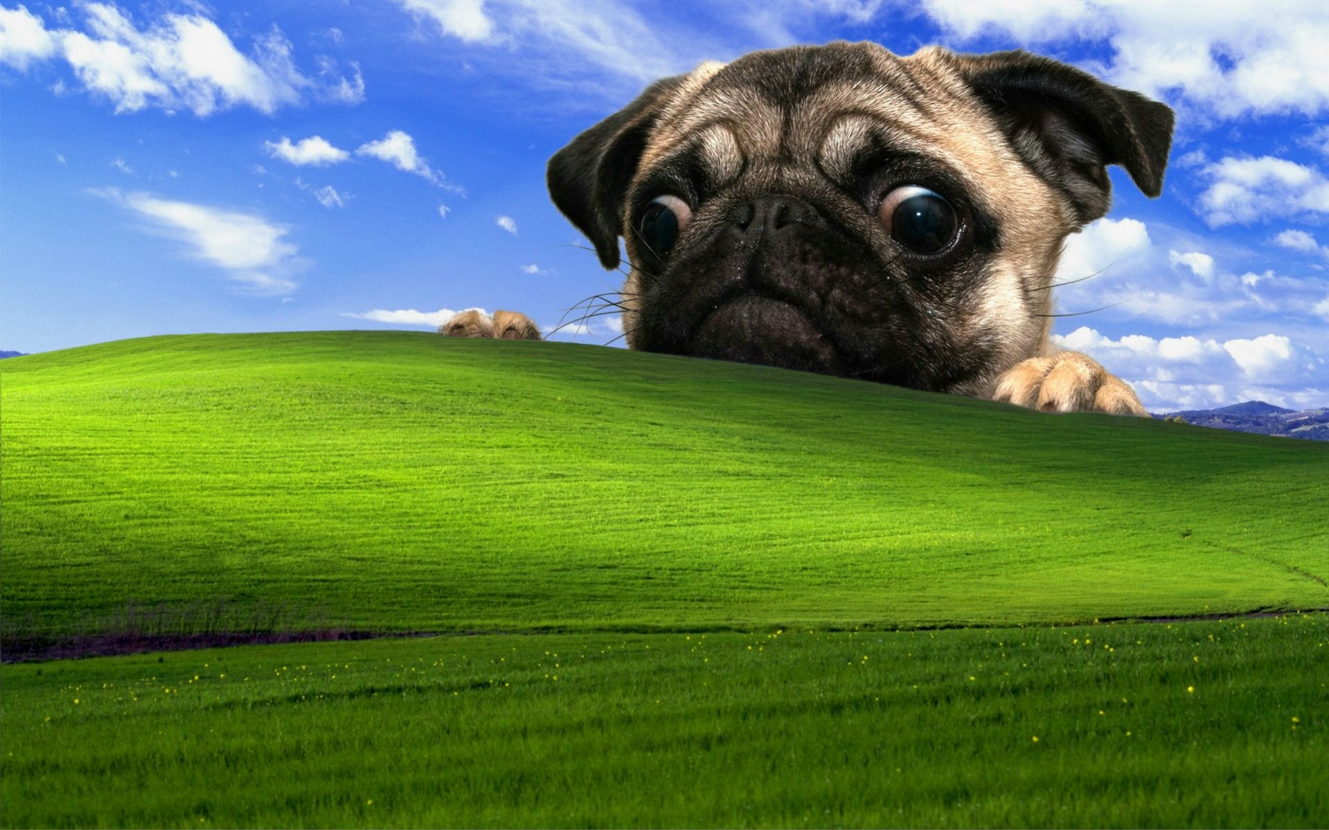 The 13 Best Takes On the Windows XP Bliss Wallpaper   Dorkly Post 1919x1199