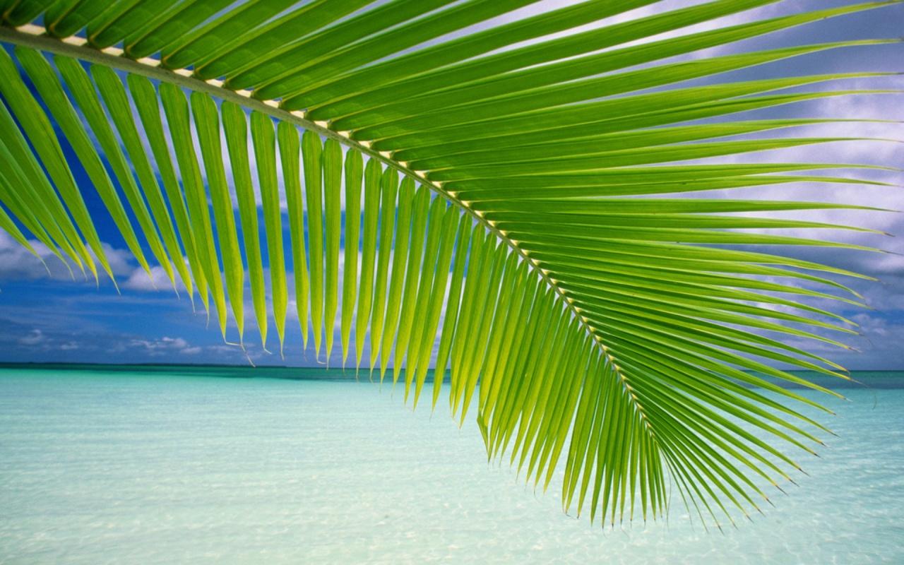 Tropical Palm Leaf 1280x800