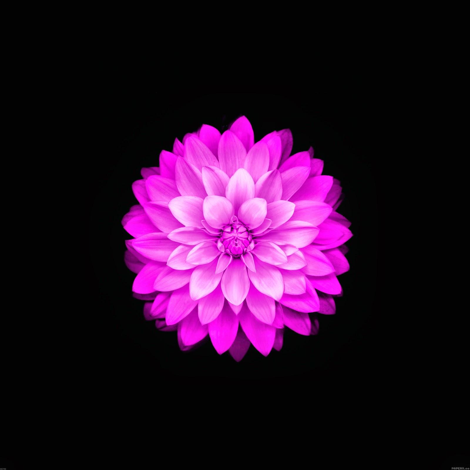 iOS 8 Flower Wallpaper - WallpaperSafari