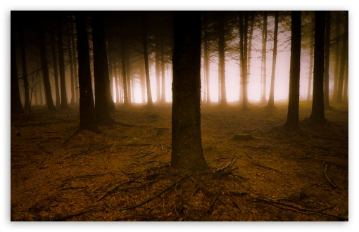 Pine Trees Forest HD desktop wallpaper High Definition Fullscreen 510x330