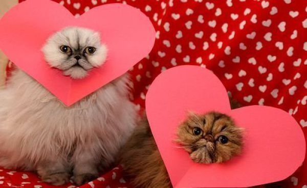 Drles de photos de Saint Valentin 600x367