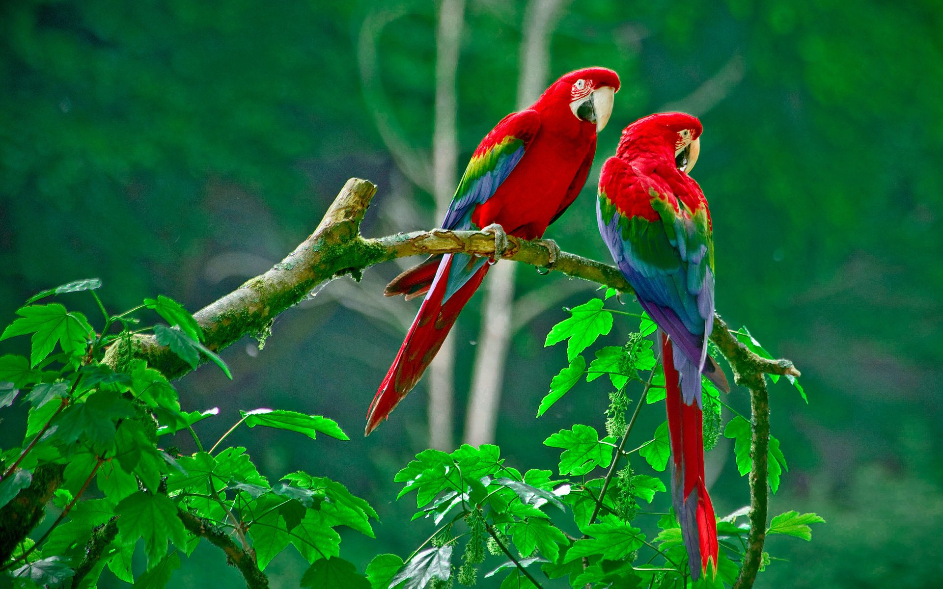 Download Incredible Wallpapers 26 Parrot 4K Ultra HD Wallpapers 1920x1200