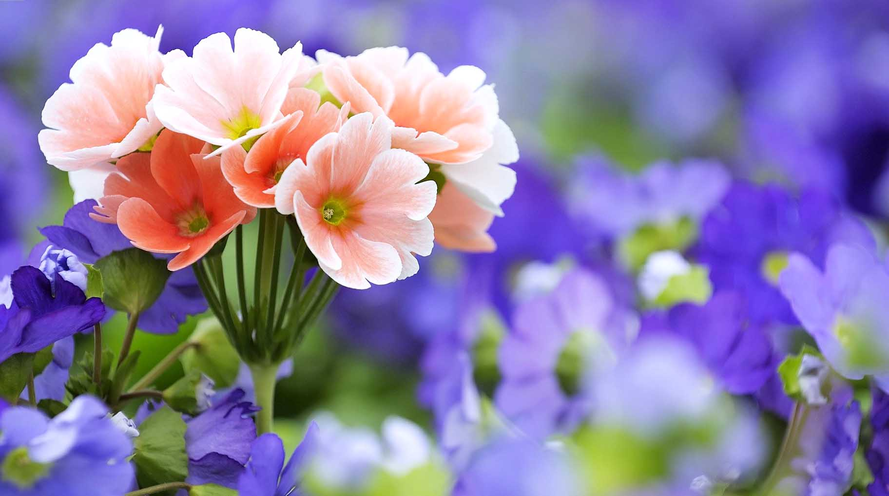 Download Wallpapers Of Flowers and Nature 2014 Elegance Collections 1824x1018