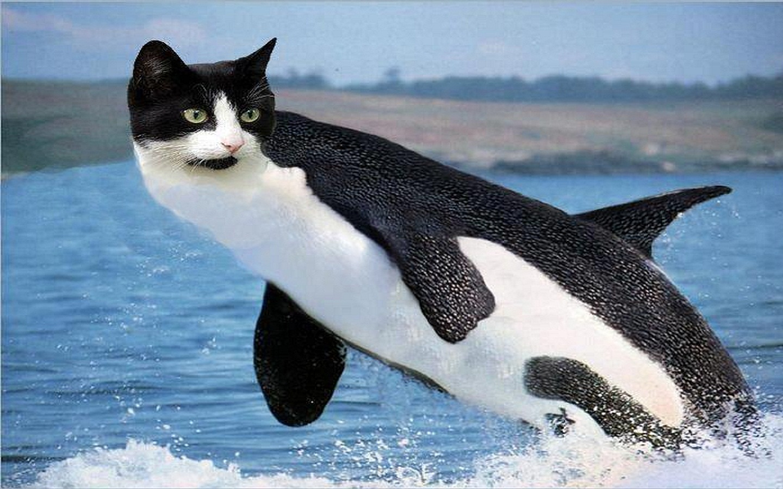orca wallpaper iphone