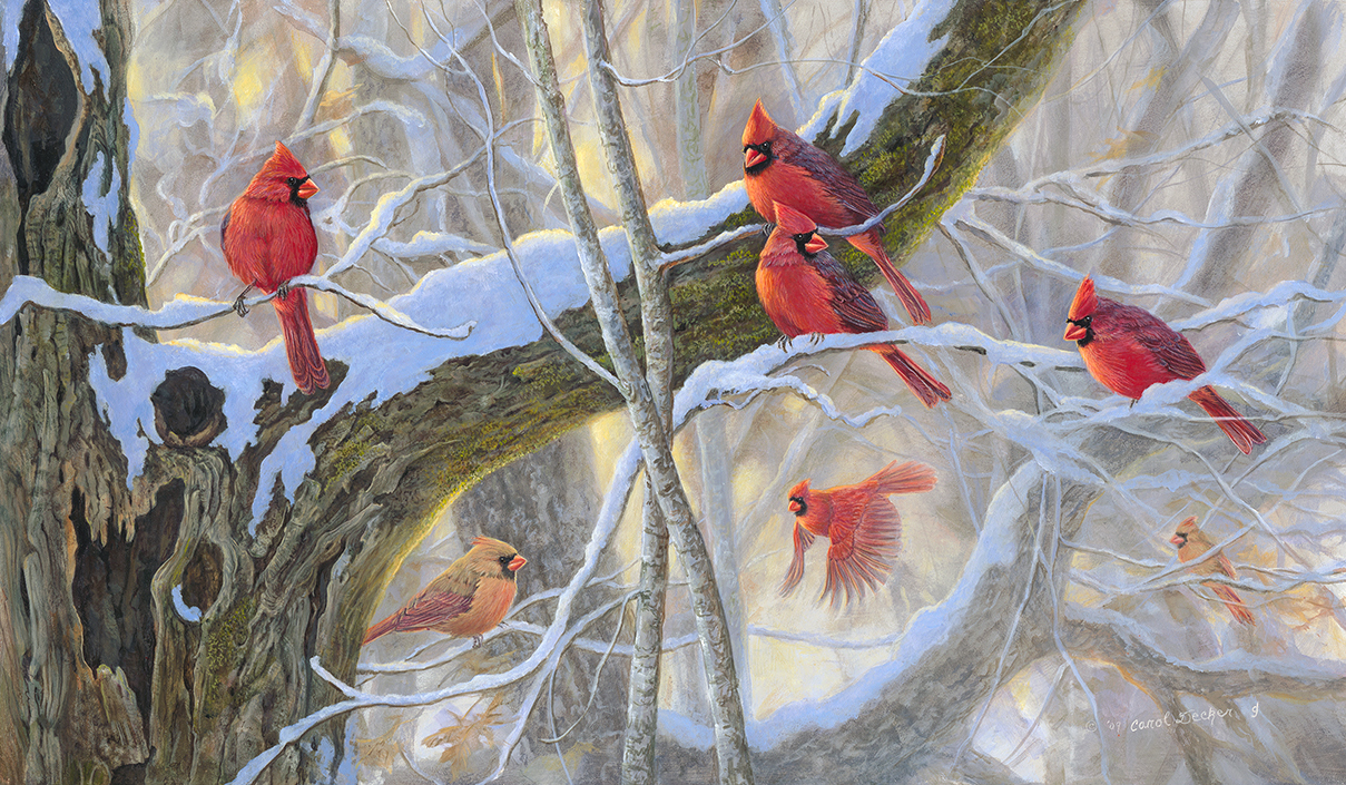 Cardinals birds   Winter Reds Wallpapers   HD Wallpapers 95121 1209x705