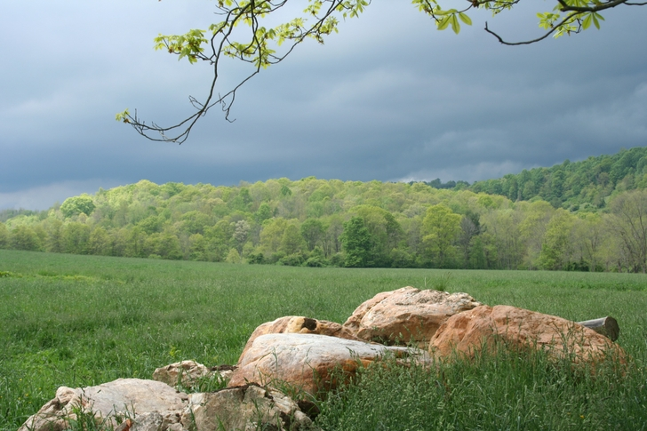 339 Category Nature Hd Wallpapers Subcategory Spring Hd Wallpapers 728x485