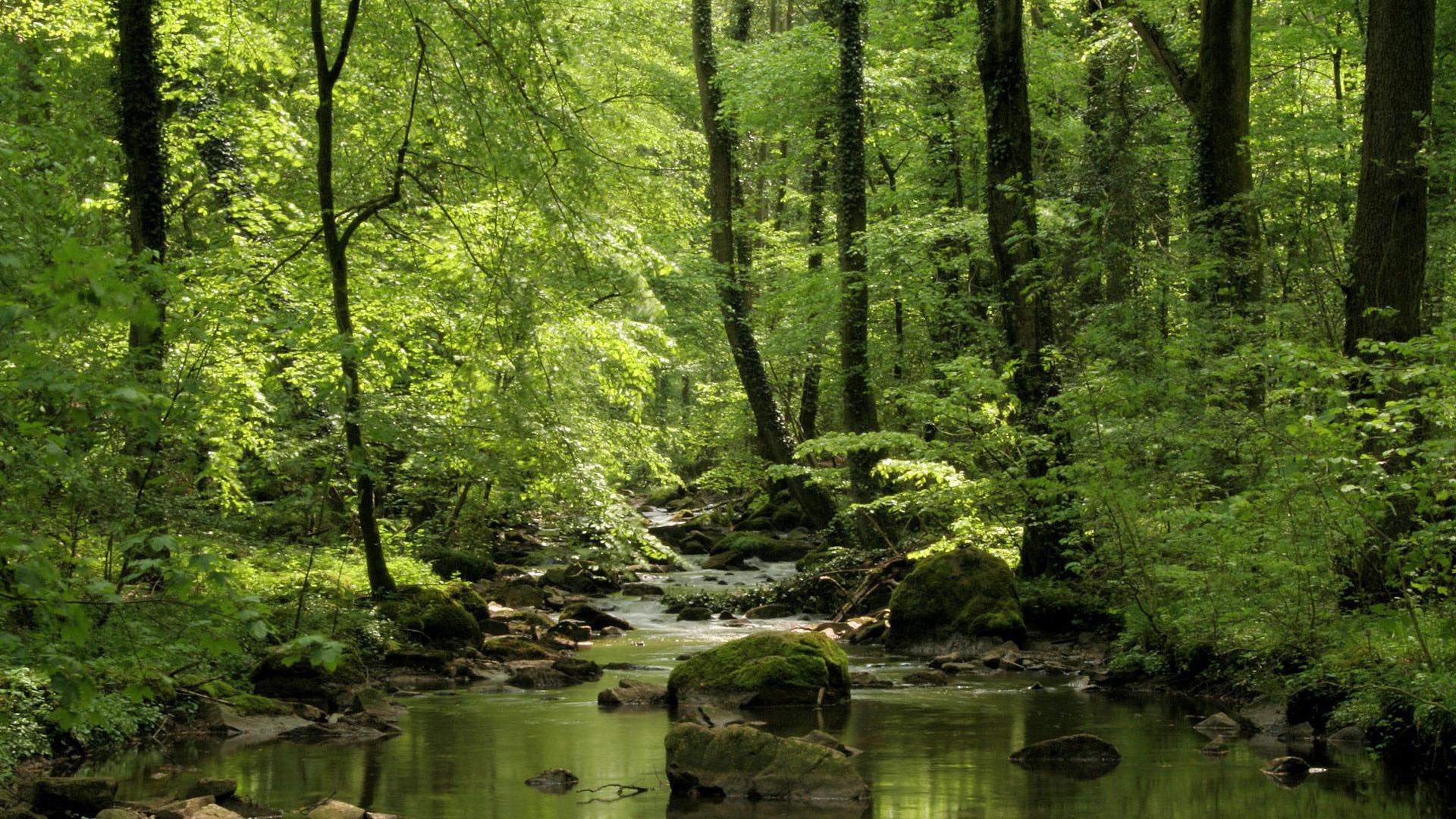 Forest Stream Wallpaper - WallpaperSafari