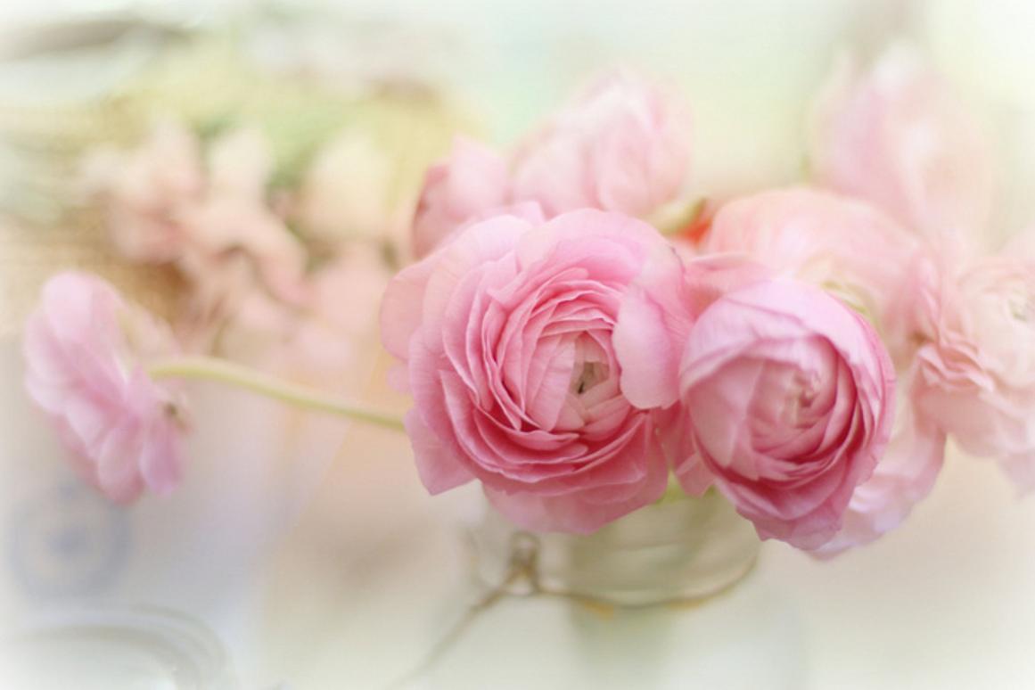 plain flower wallpaper