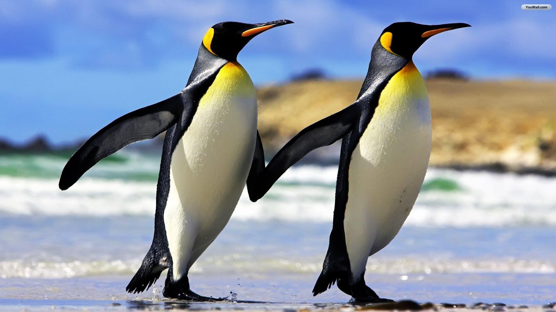 Antarctic Penguins Wallpaper